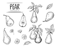 Pear Illustration. Hand Drawn ...