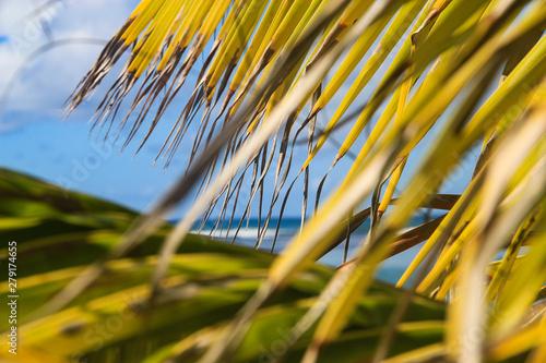Canvas Prints Palm tree Praia