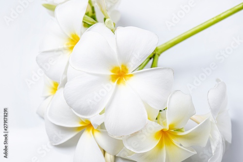 Wall Murals Plumeria Close up plumeria flowers panicle on white background