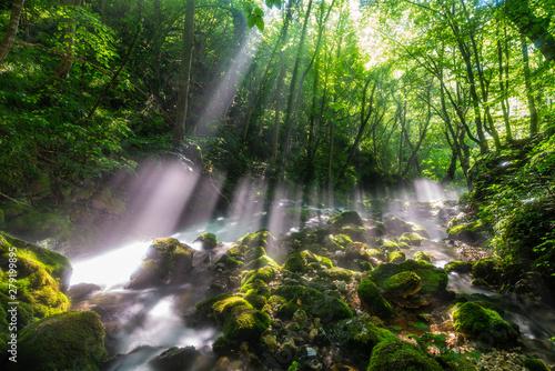 Door stickers Forest river Morning sun flare light at Bigar Waterfall,Caras-Severin,Romania