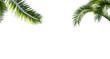 canvas print picture - freigestellte palmenblätter auf weiss
