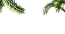 Freigestellte Palmenblätter A...