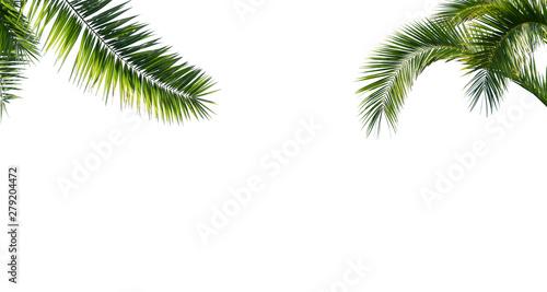 freigestellte palmenblätter auf weiss