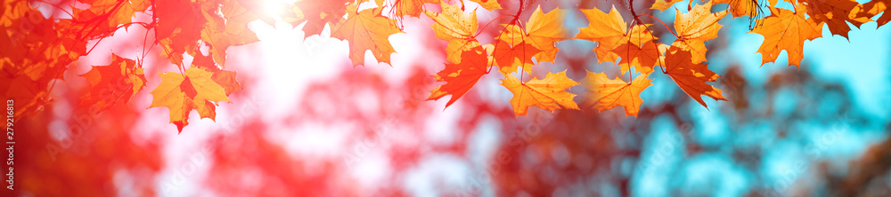 Fototapety, obrazy: Banner autumn background