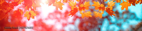 Foto  Banner autumn background
