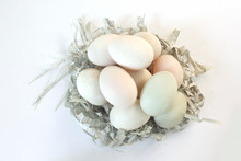 Fresh Duck Eggs Decorated In A Nest Of Paper, Put On A White Scene.