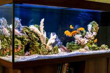 Freshwater Aquarium In Pseudo-...