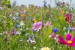 canvas print picture - Bunte blühende Sommerwiese mit Wildblumen für Bienen und Insekten