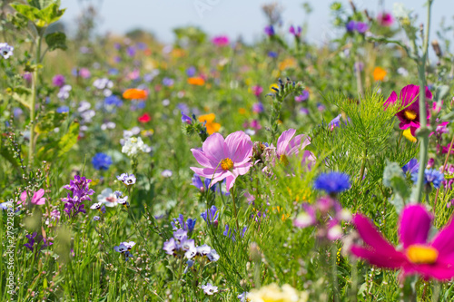 Deurstickers Weide, Moeras Bunte blühende Sommerwiese mit Wildblumen für Bienen und Insekten