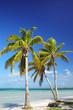 Palm trees on the coast of Ouvea lagoon on Ouvea Island, Loyalty Islands, New Caledonia