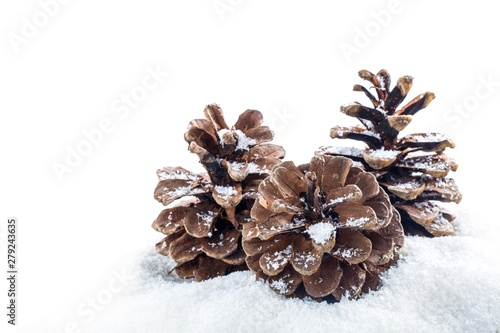 Fotomural pine cones on a snow