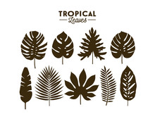 Set Of Tropical Leaves Silhoue...