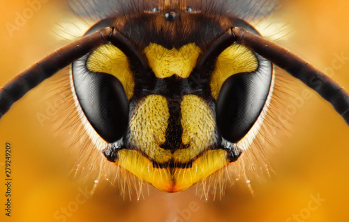 Stampa su Tela Extreme sharp and detailed study of wasp head
