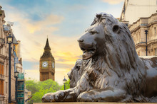 Lion Sculpture At Trafalgar Square With Big Ben On The Background In London, UK