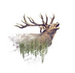 canvas print picture - Deer and Forest. Watercolor Double Exposure effect on white background