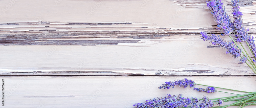 Fototapety, obrazy: Summertime - lavender flowers. Bunch of lavender flowers on white rustic wooden background.