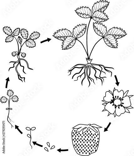 Click here for Seed to Plant Coloring Page | Coloring pictures ... | 500x428