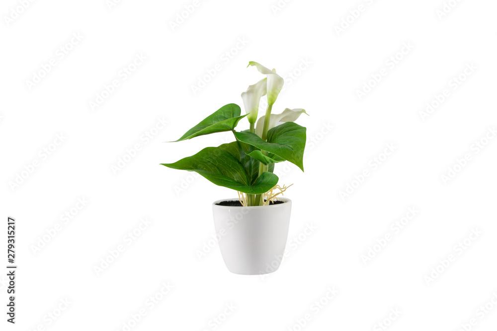Fototapety, obrazy: Decorative green flower in white vase. Isolated on white background.