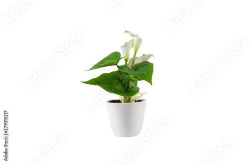 Poster Vegetal Decorative green flower in white vase. Isolated on white background.