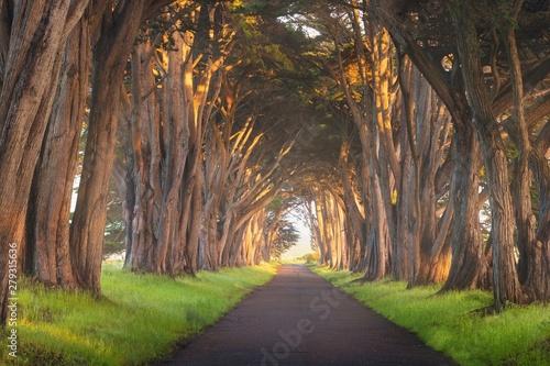 Fototapeta Pergola  przejscie-pod-drzewami