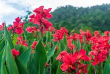 Flower Of An Thailand Shot (tak Thailand)