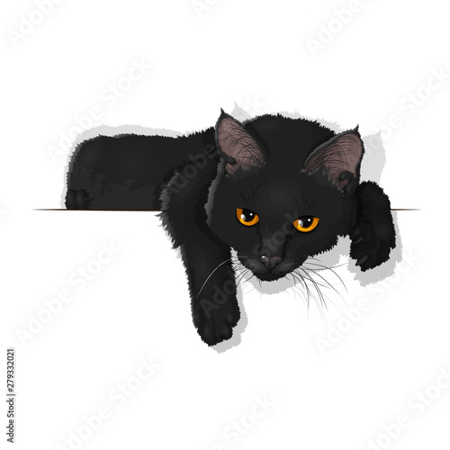 Vector illustration of a domestic black cat isolated on white Fototapete
