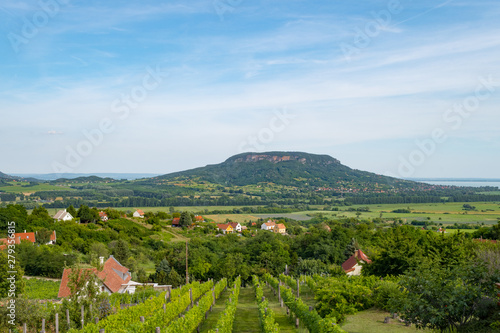 Tablou Canvas Lake Balaton scenery with Badacsony Hill, the center of Badacsony Wine Region an