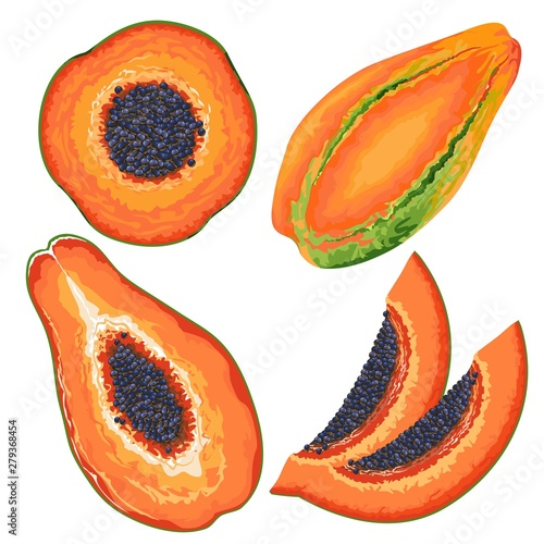 Foto op Plexiglas Draw Papaya Slices and Entire Vector Illustration isolated on white