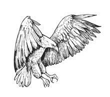 Sketch Of Eagle. Hand Drawn Illustration Converted To Vector