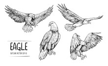 Sketch Of Eagle. Hand Drawn Il...