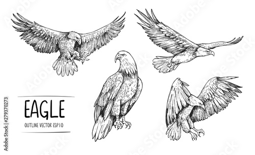 Fototapeta Sketch of eagle. Hand drawn illustration converted to vector