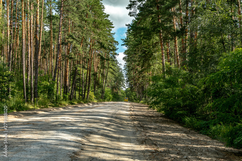 Foto op Canvas Weg in bos The road among the pine forest on a summer day