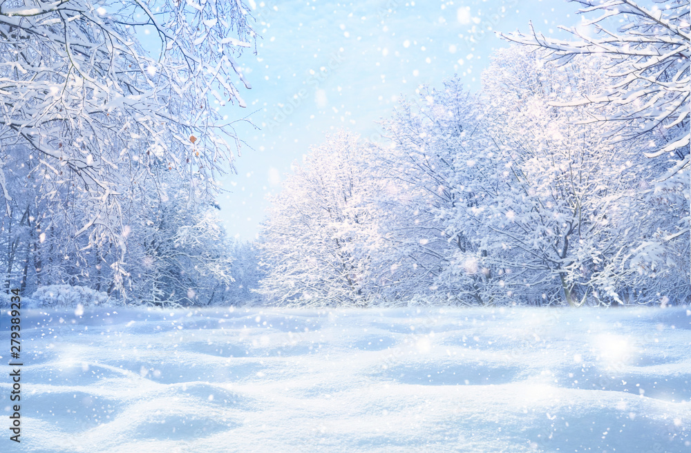 Fototapety, obrazy: Winter Christmas idyllic landscape. White trees in forest covered with snow, snowdrifts and snowfall against blue sky in sunny day on nature outdoors,  blue tones.