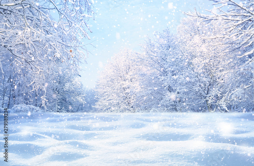Garden Poster Light blue Winter Christmas idyllic landscape. White trees in forest covered with snow, snowdrifts and snowfall against blue sky in sunny day on nature outdoors, blue tones.