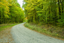 A Gravel Road Through A Green Deciduous Forest