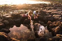 Siblings Exploring Rock Pool At Low Tide