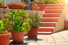 Beautiful Garden On A Sunny Da...