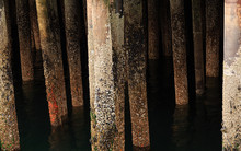 Old Pier Pilings Covered In Shells And Barnacles