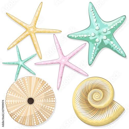 Foto op Plexiglas Draw Seashells, starfish, sea urchins retro style vector elements isolated on white