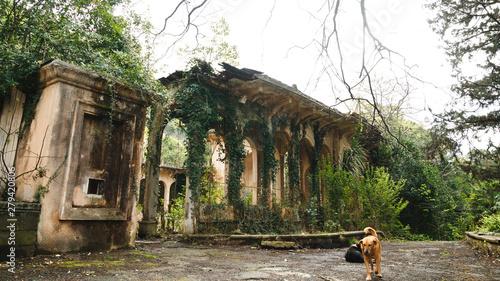 Obraz na plátně Stray dog on background of abandoned ruins with highlight