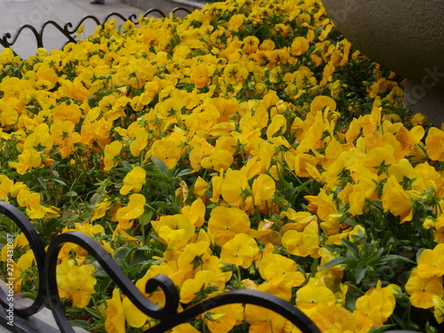 Bed of yellow flowers in a garden at a park