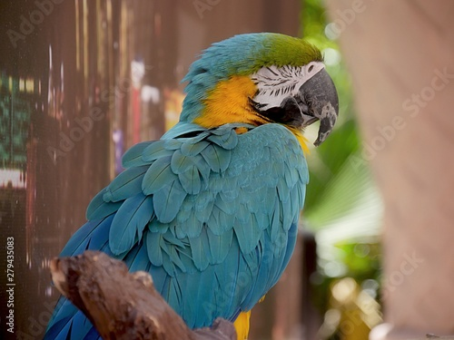 Side view of a parrot perched on a piece of wood