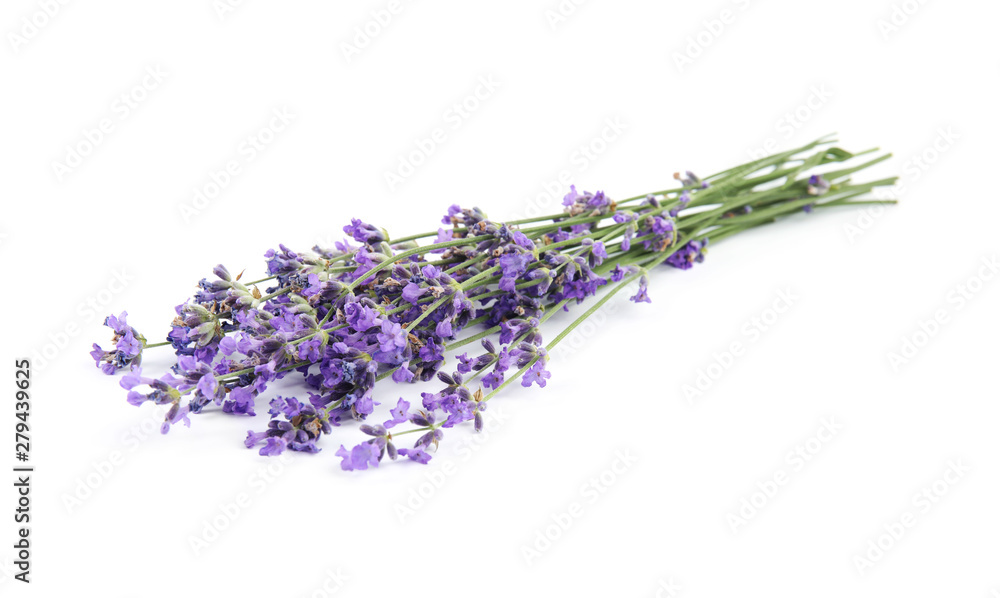 Fototapety, obrazy: Beautiful tender lavender flowers on white background