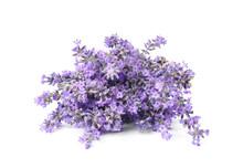 Beautiful Tender Lavender Flow...