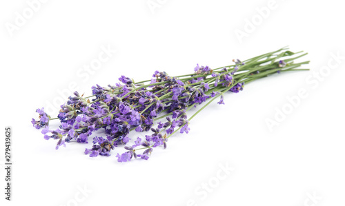Beautiful tender lavender flowers on white background Canvas Print