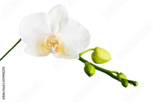 Tuinposter Orchidee Orchid twigs isolated on white background.