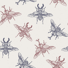 Beetles, Hand Draw Sketch Seam...
