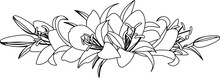 Bouquet Of Lilies, Vector Illustration. Black And White Drawing