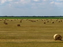 Summer Landscape With The Hay Bales In The Field. Freshly Rolled Hay Bales On Field In Ukraine. Rural And Village Motive With Baled Hay During The Harvesting