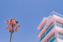 Orange Palm Tree And Part Of H...